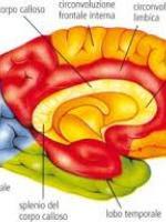 pagine psicologi elenco psicoterapeuti